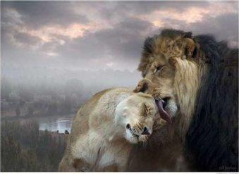 lionsinlove