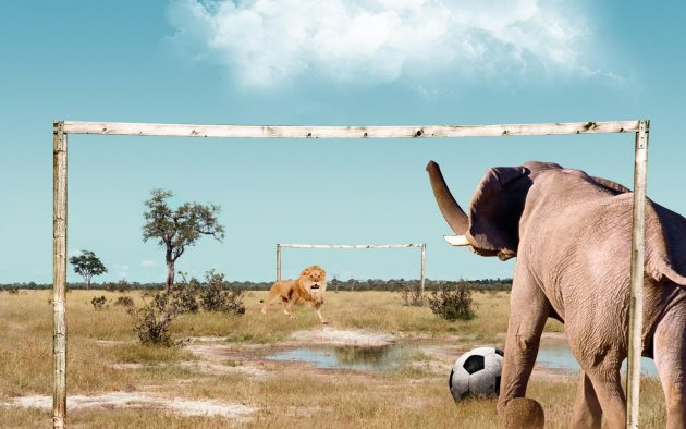 0af63080-e259-11e3-935f-694832d5344d_Funny-animal-football